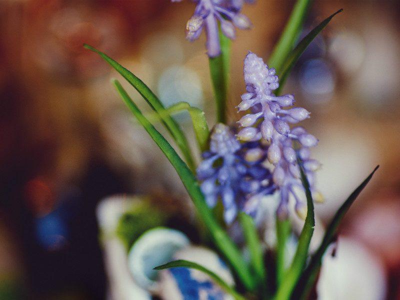 let's get blooming grape hyacinth bag