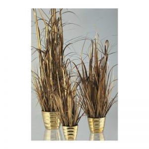 Gold Champagne Grass