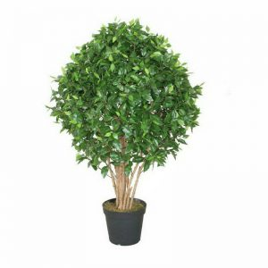 Ficus Tree 120 cm