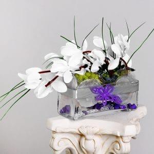 White Cyclamen in Glass