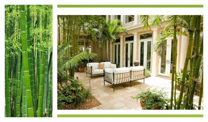 Bamboo Tree – Inspiration