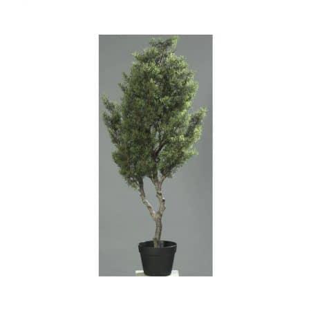 conifer tree Christmas