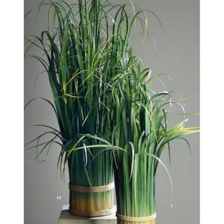 Calamus Bundled Grass 70 and 110 cm