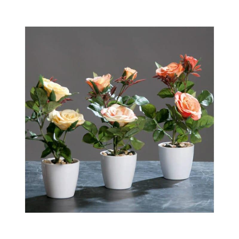 Pastel Rose in Pot