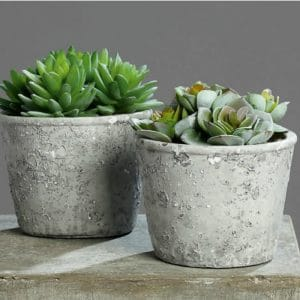 Succulent in Grey Pot