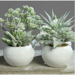 Grey Succulent in White Pot