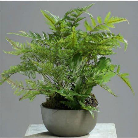 fern selaginella artficial plant
