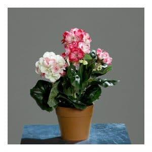 Geranium Small Pot
