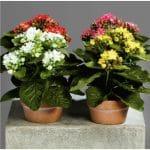 Artificial kalanchoe flowers in pots