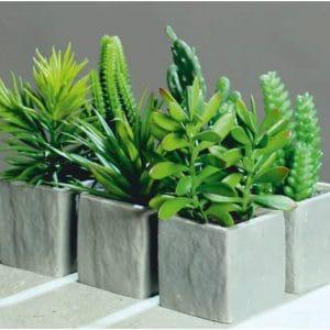 Succulents in Stone Pot