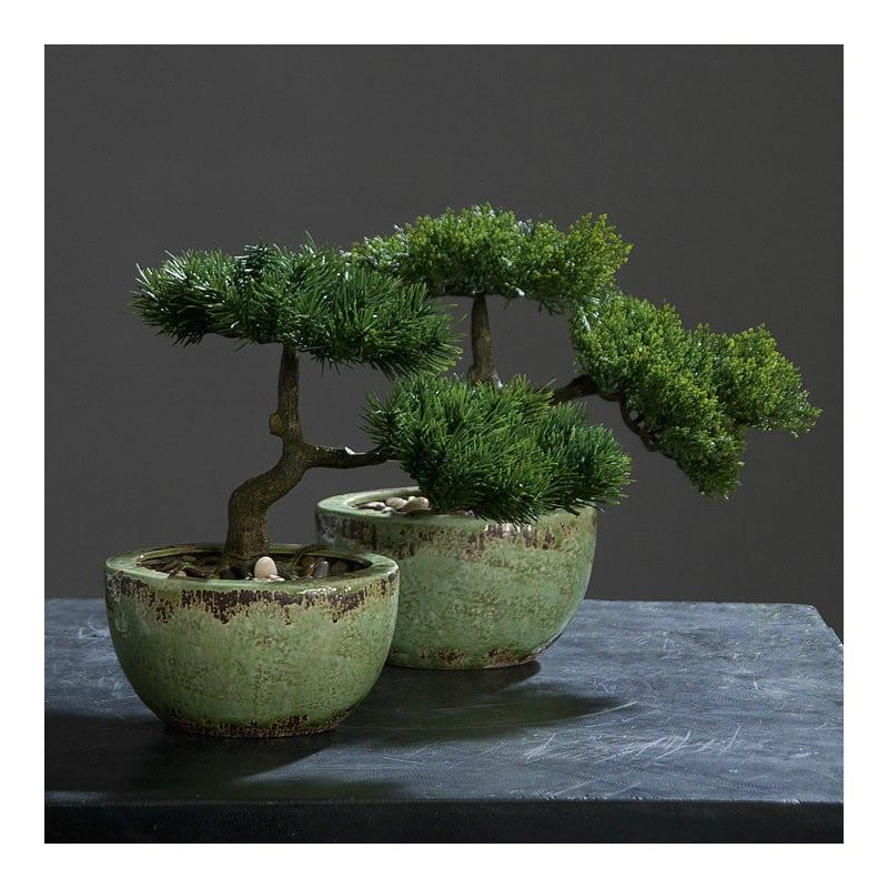 bonsai in the bowl 25 cm