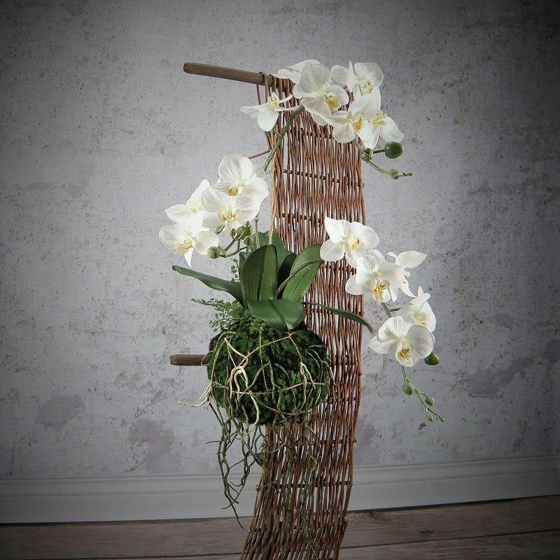 orchid-wanda-2