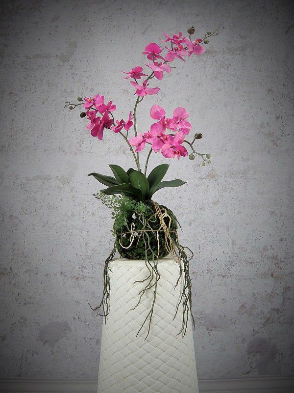 orchid-wanda-z3