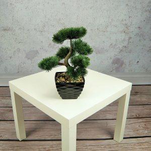 Pine Bonsai