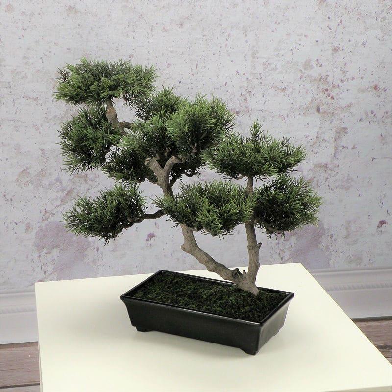 Bonsai in Japanese Pot