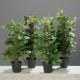 greenery assortment pot philo pothos ivy