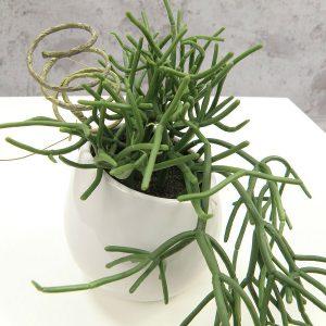 Artificial Succulent in White Pot