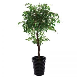Ficus Tree 140 cm