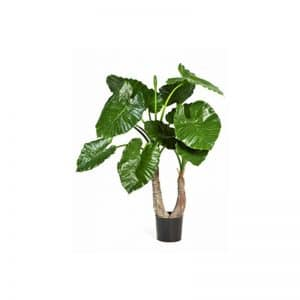 Alocasia Calidora 100 cm