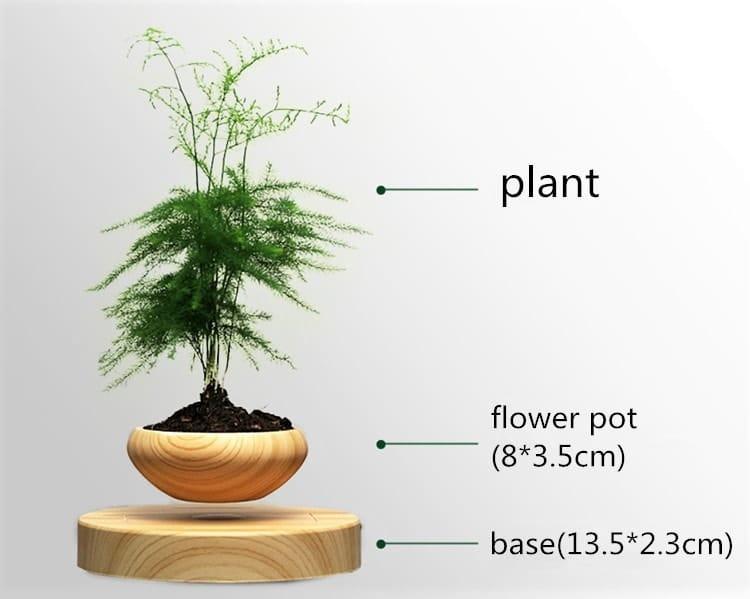 air bonsai inographic