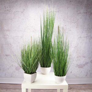 Zebra Grass 60 cm