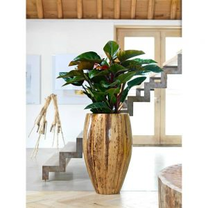 Natura Banana Vases
