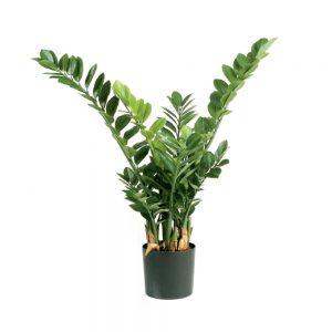 artificial plant zamioculcas