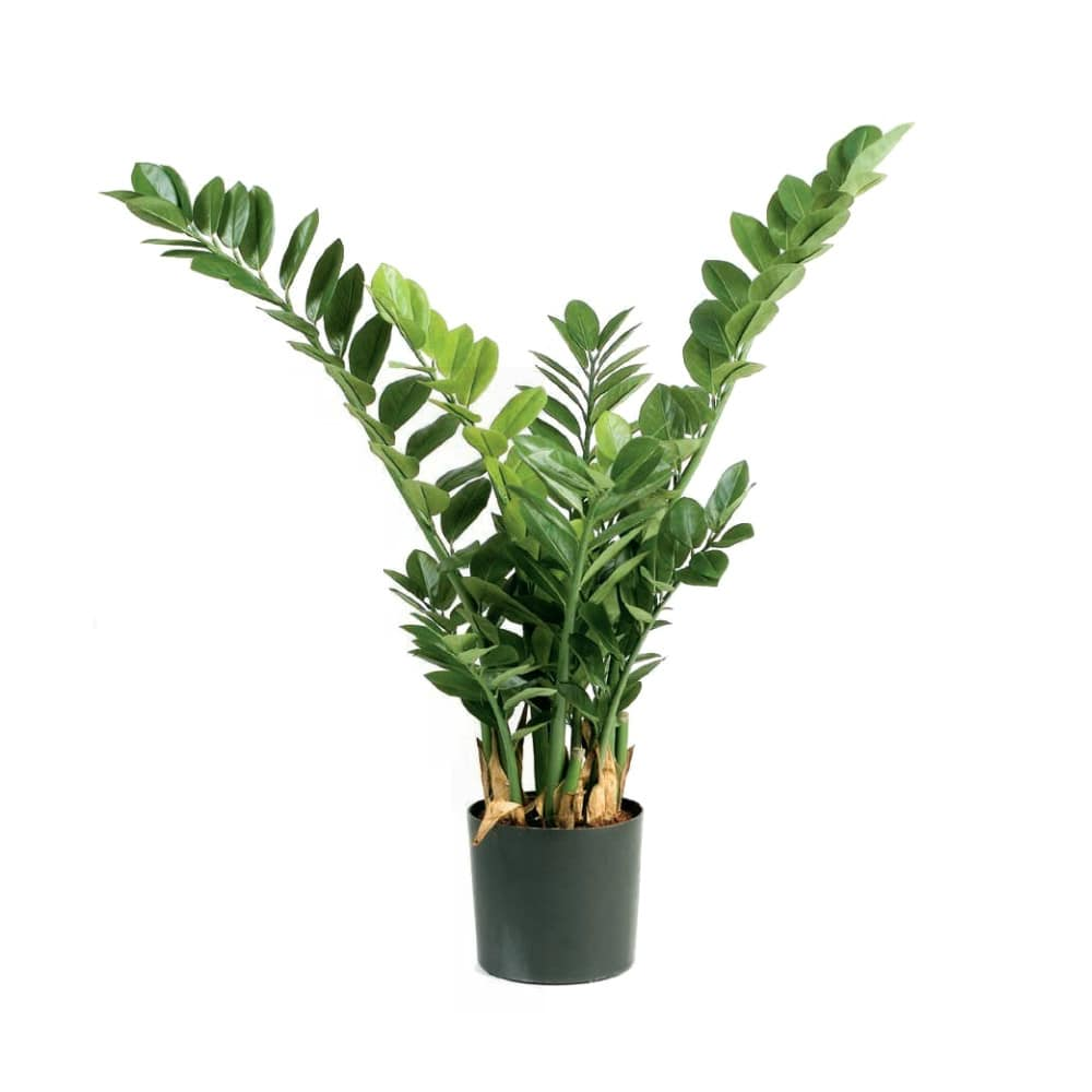 smaragd zamio artificial plant zamioculcas