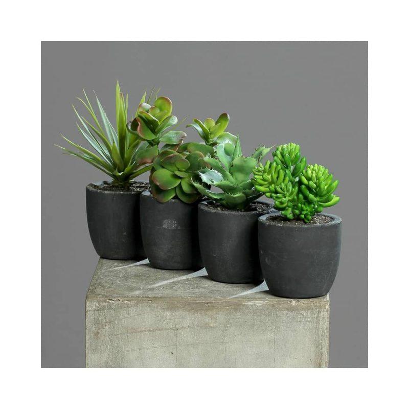 succulents mix in dark grey pot
