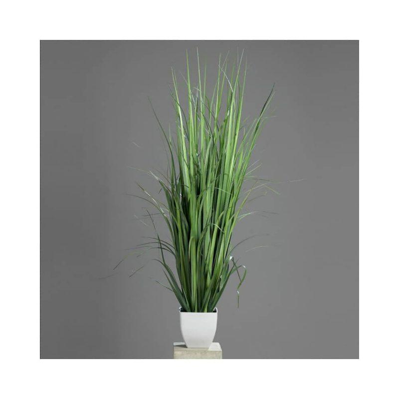 sweet flag calamus grass