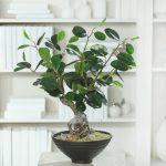 artificial plants ficus panda bonsai tree