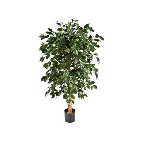 Classic Dark Green Ficus Tree