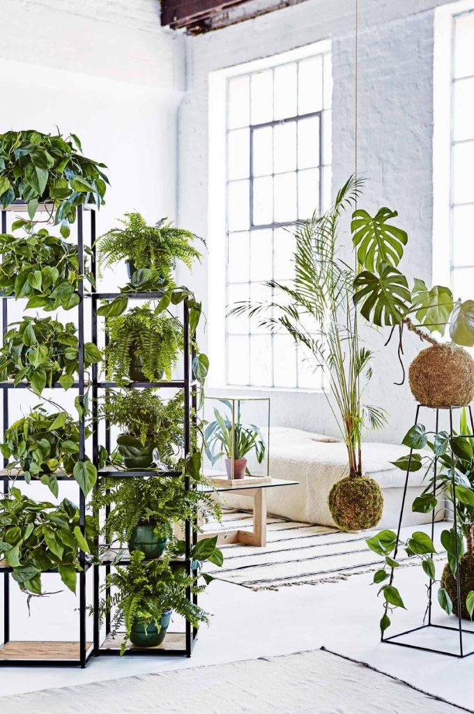 Free standing shelves pot plants
