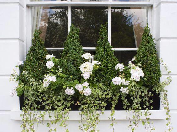 Trailing plants in a window box