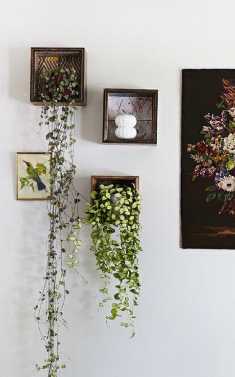Trailing plants on display box shelves artificial plants