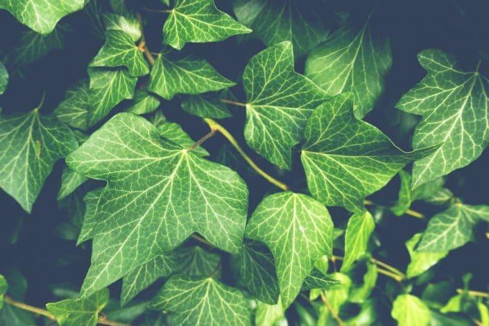 Dark side of houseplants