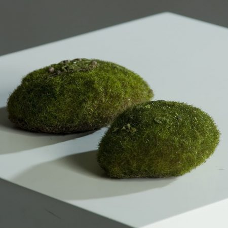 moss sponge 13cm