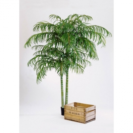 palm-areka-de-luxe