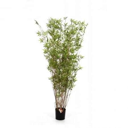bamboo-2