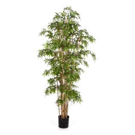 Japanese Bamboo #3
