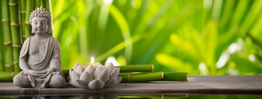 Do Artificial Plants Affect Feng Shui Energies? #2