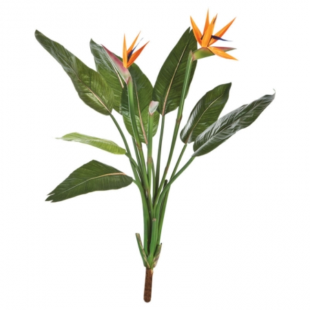 strelitzia palnt flower