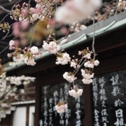 Florsey Japanese Garden