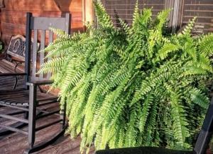 Floresy - plant design trends