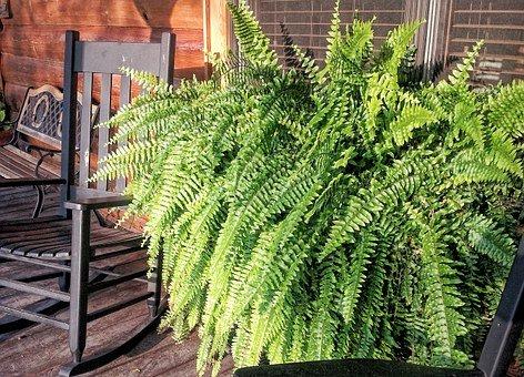 Floresy- plant design trends